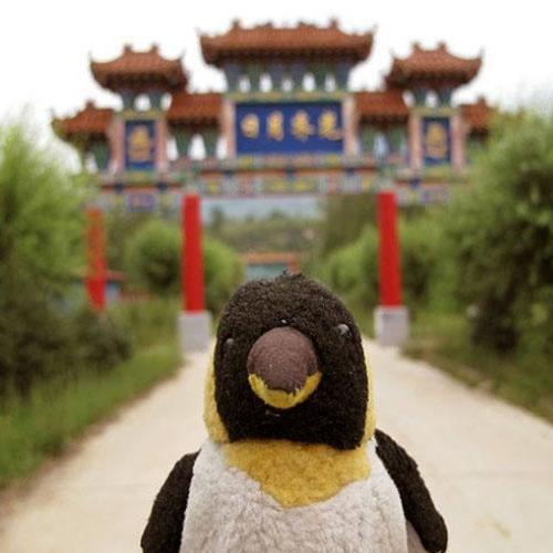 Monsieur Pingouin Voyages à moto