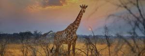 voyage-moto-afrique-namibie-animaux-monsieur-pingouin-30%