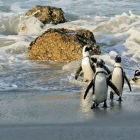 Voyage-moto-monsieur-pingouin-afrique-du-sud-1