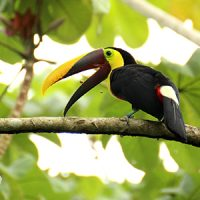 Voyage moto Costa Rica avec Monsieur Pingouin
