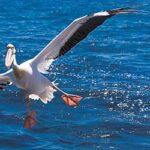 voyage-moto-Namibie-Pelican-Point-Monsieur-Pingouin