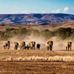 voyage-moto-Namibie-elephant-Monsieur-Pingouin