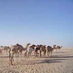 voyage-moto-Maroc-Paris-Dakar-Monsieur-Pingouin-NoMansLand